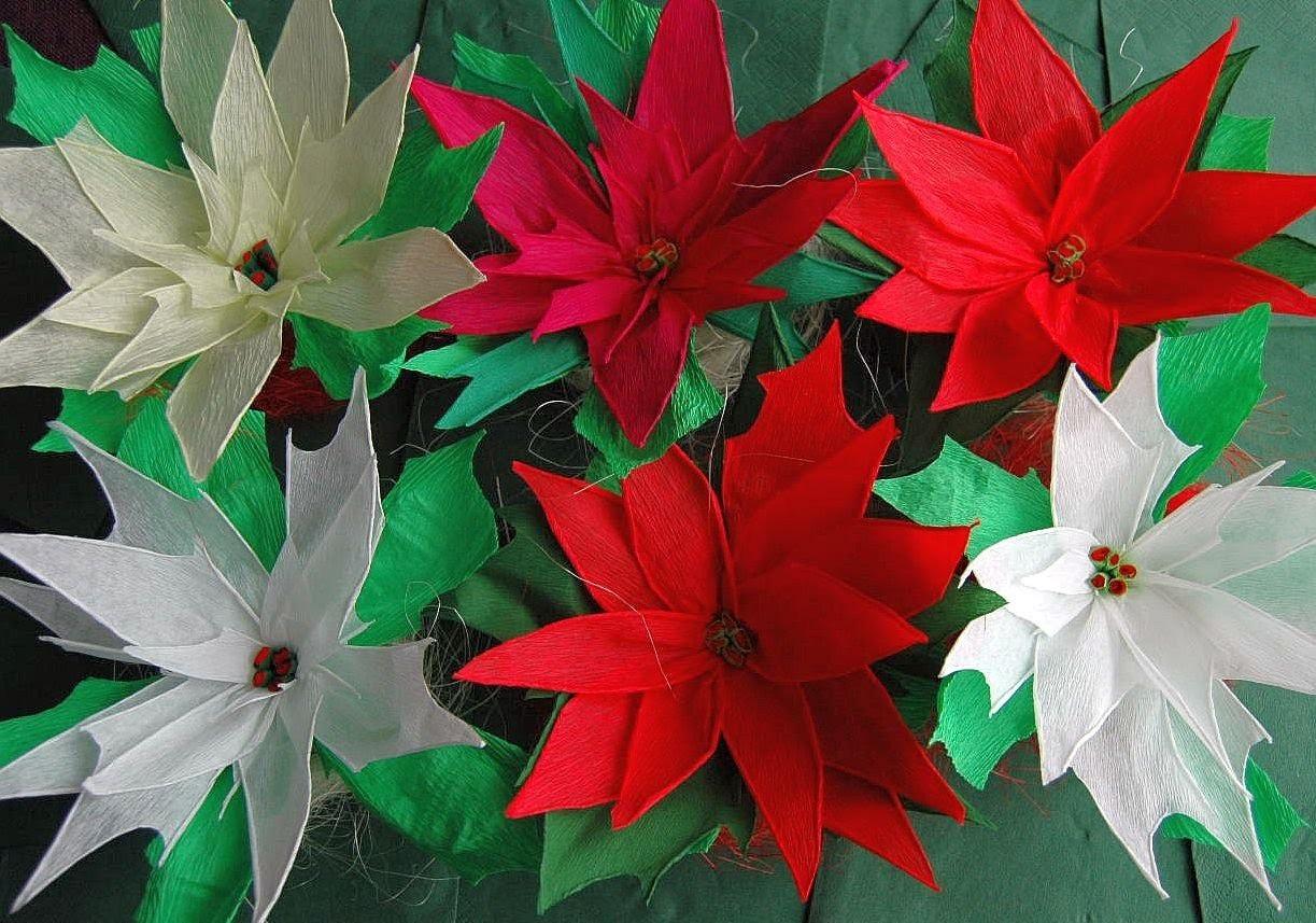 Poinsecja.Crepe paper  Poinsettia  DIY