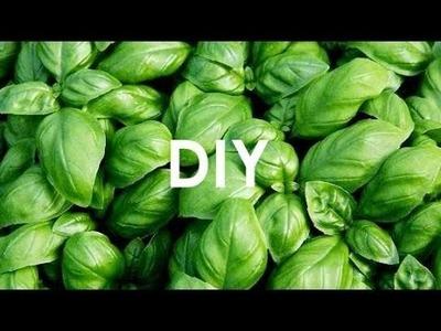 DIY - zioła na parapecie