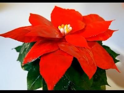 Kwiaty z liści #3 Gwiazda Betlejemska, Poinsencja, Wilczomlecz - Zrób  to sam, DIY