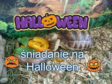 DIY śniadanie dla żółwia na Halloween