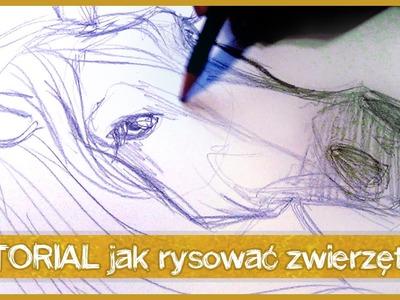 Olsikowa rysuje#18 - Jak rysować zwierzęta [TUTORIAL] + INFO!