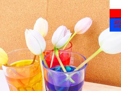 DIY International | farbowanie tulipanów barwnikami spożywczymi | żywe kwiaty farbujemy