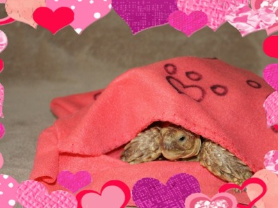 DIY# 16 kryjówka. kieszonka dla zwierzaka prezent na walentynki+ czytaj opis