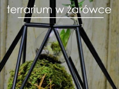 Zrób sobie swój mini ogródek w żarówce!  terrarium plants DIY